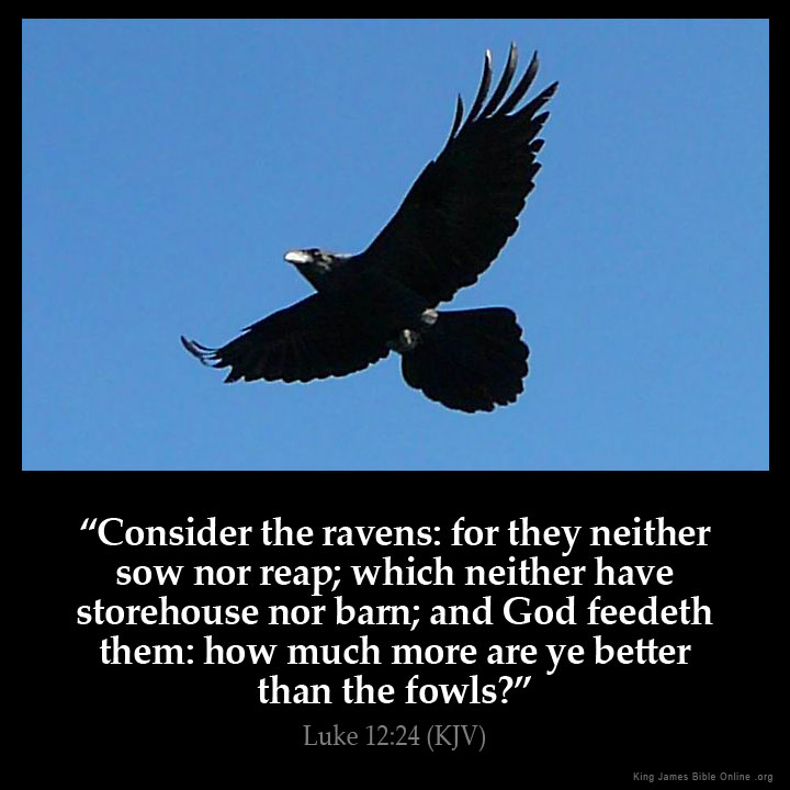 Luke 1224 Kjv Consider The Ravens For They Neither Sow Nor Reap