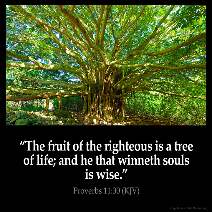Proverbs 11:30 Inspirational Image