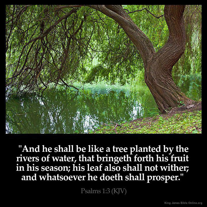 Psalms 1:3 Inspirational Image