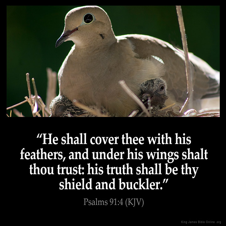 Psalms 91:4 Inspirational Image