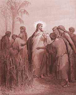 Mark Chapter 2: The Disciples Pick Corn on the Sabbath